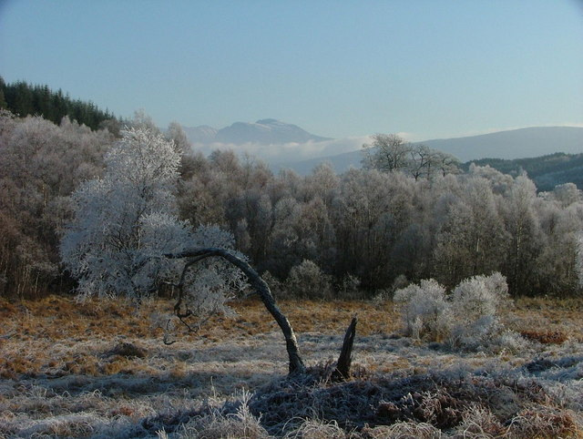 Frosty trees beside the A830