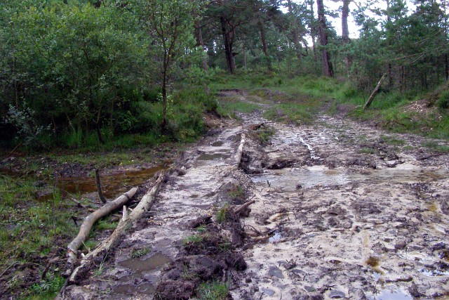 Muddy ford north-west of Dur Hill Inclosure, New Forest