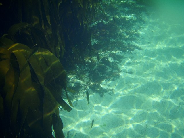 Kelp forest, Sanna bay