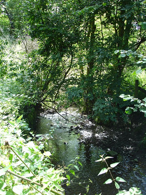 Brook in Moydog Wood