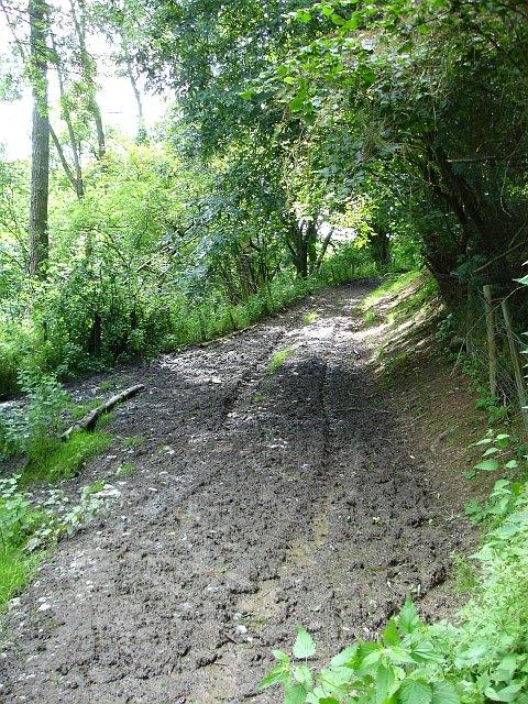 Track in Moydog Wood