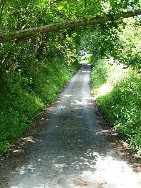 Road through Moydog Wood