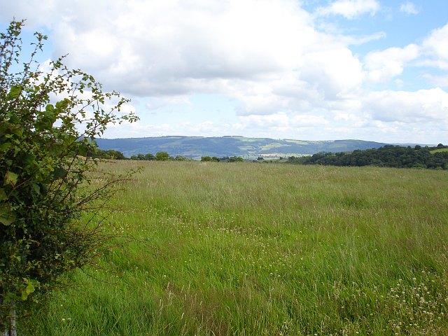 High grassland