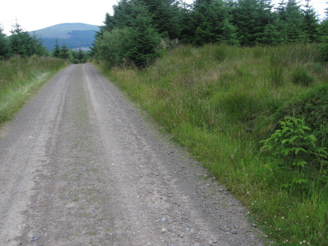 Forest track near Grey Mare