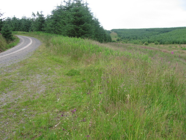 Forest track and Blenoch Burn clearing