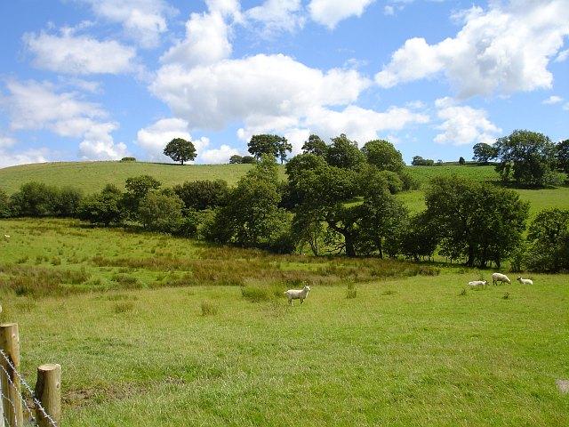 Boggy pasture below Graig Wood