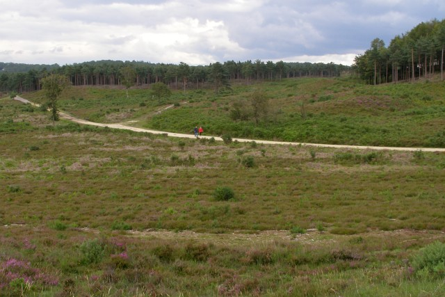 Cleared area in the west of the Dur Hill Inclosure, New Forest
