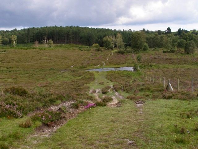Path between Dur Hill Inclosure and Bisterne Common, New Forest