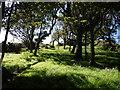 SX1698 : Small wood near West Dizzard by Derek Harper