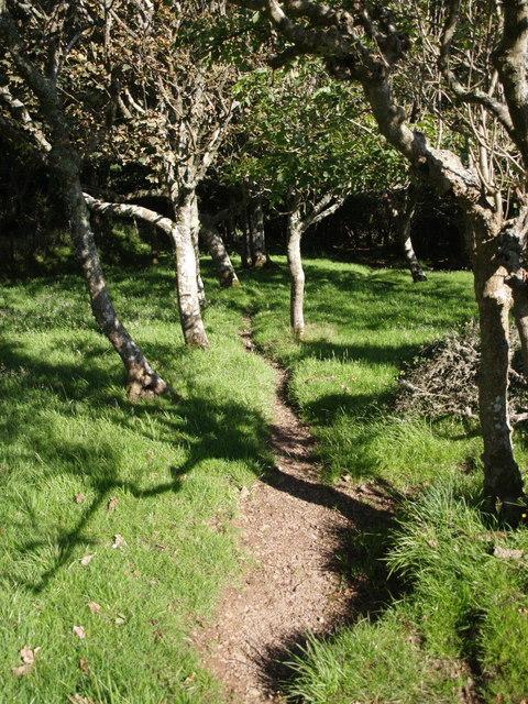 Path entering woodland near West Dizzard