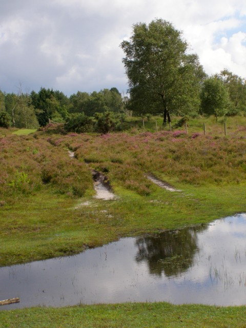 View towards Lugden Barrow from the north, New Forest