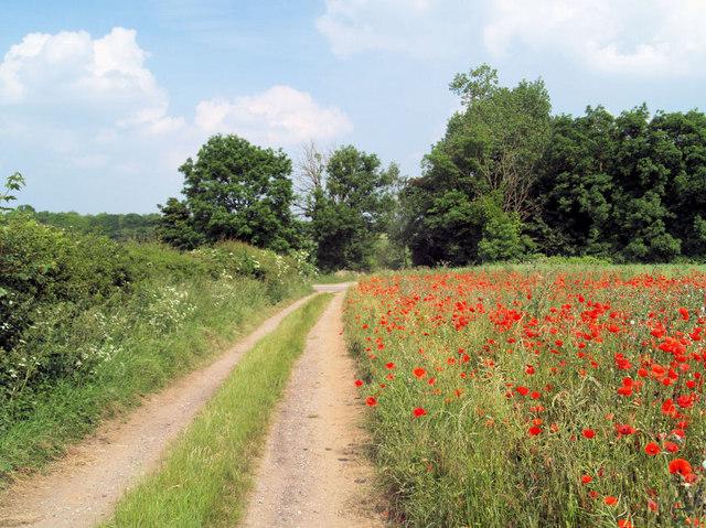 Farm track with poppy field.