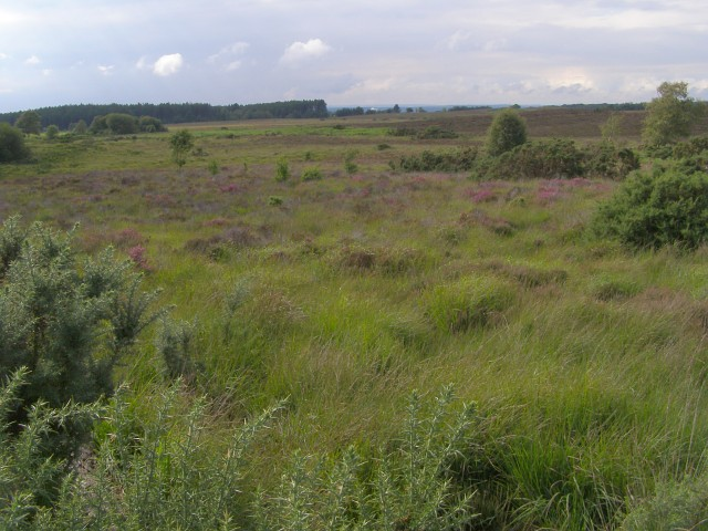 Bisterne Common from Lugden Barrow, New Forest