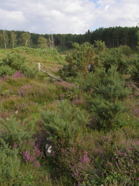 Eastern corner of Bisterne Common, New Forest