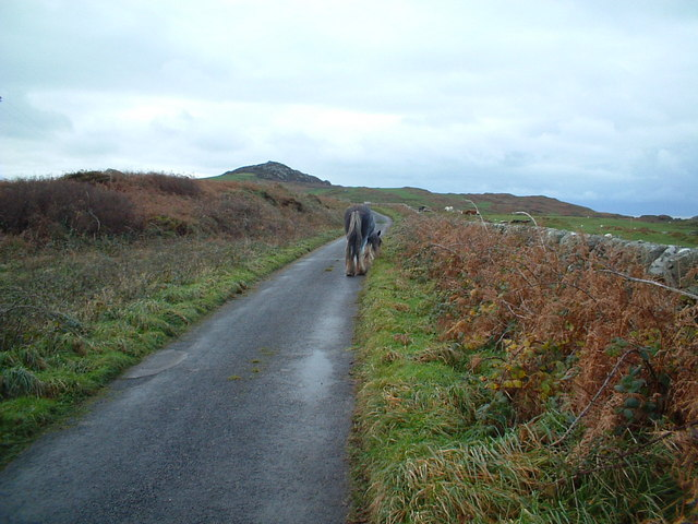 You meet all sorts on Gigha's main road!