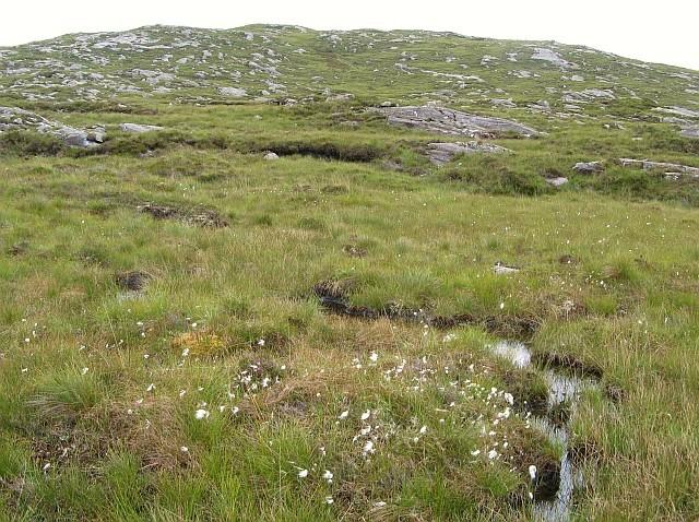 Bog, rocks and cottongrass