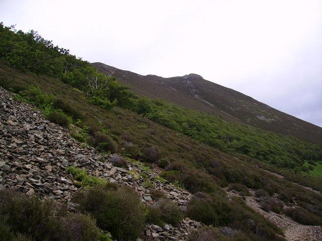 Dwarf Oaks, Scar Crags