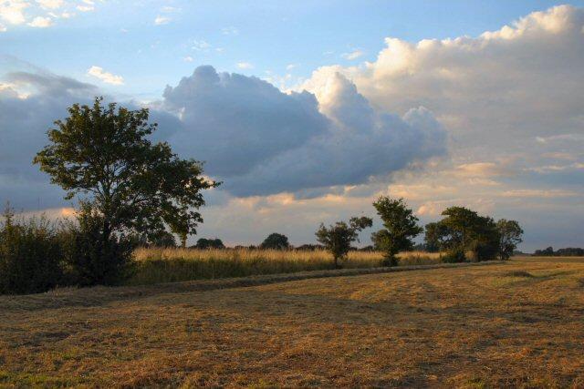 Farmland at Mickfield