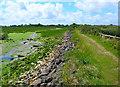 SZ8596 : Permissive Bridleway, Pagham Harbour by Simon Carey