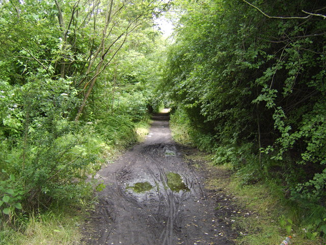 Path in Newshot Island Local Nature Reserve