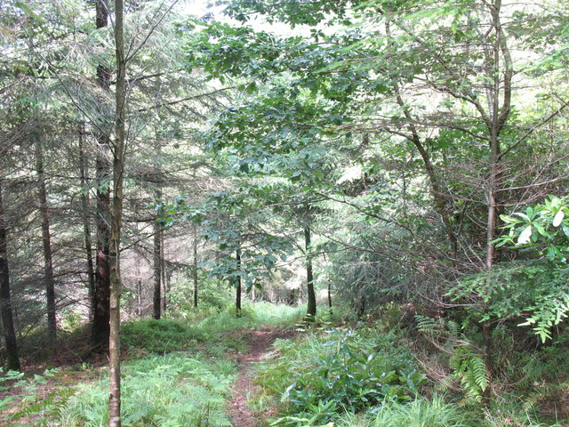 Footpath eastwards through the forest