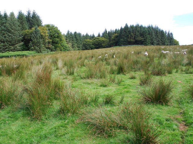 Rough grazing for sheep