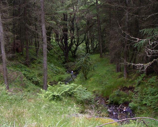 Stream in the forest east of Kielder Village
