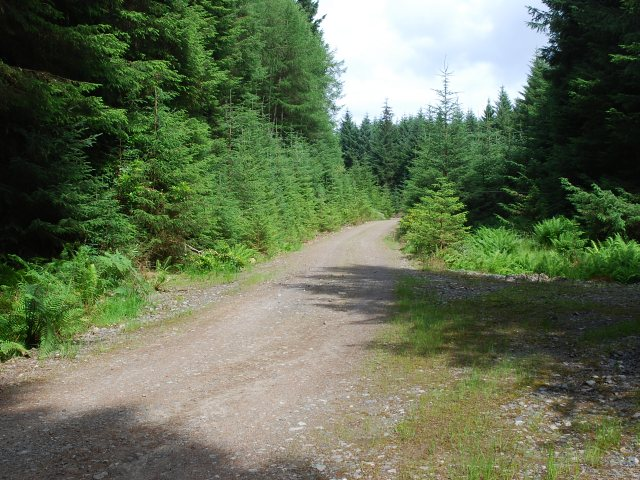 Forest road above Kilmory