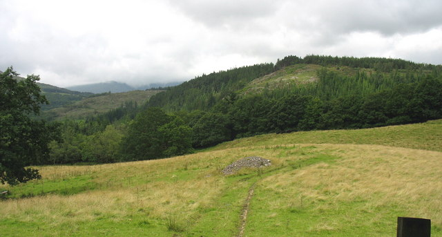 Cae'n y coed - an enclave of pasture land in the forest