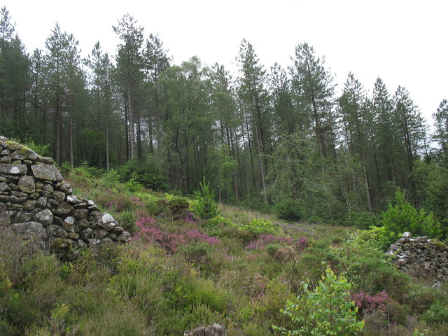 Heather and rhododendron in a clearing on Gallt Dol-frwynog