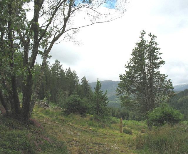 Path junction on Gallt Dol-frwynog