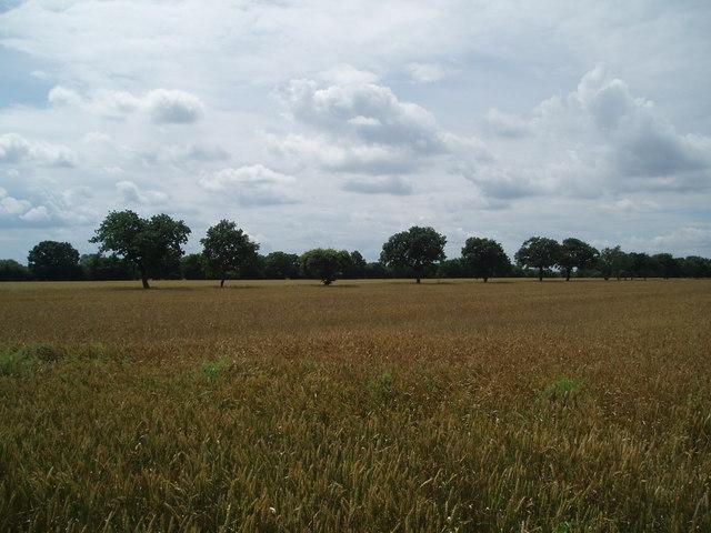 Fields on Mawson Green