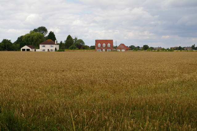 Wheat field and houses on Sandygate Lane