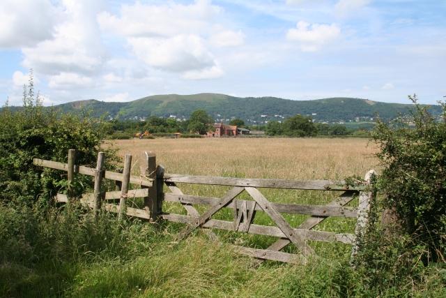 Lumbertree Farm