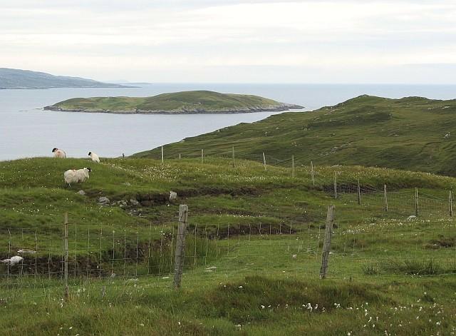 Sheep grazing near Cliasmaol