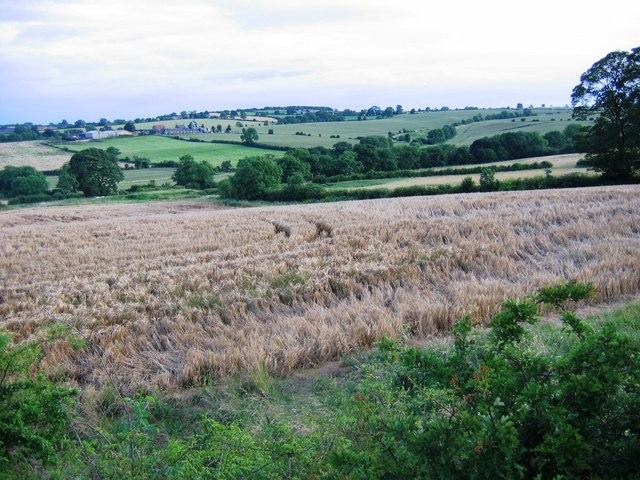 Newbiggin Farm