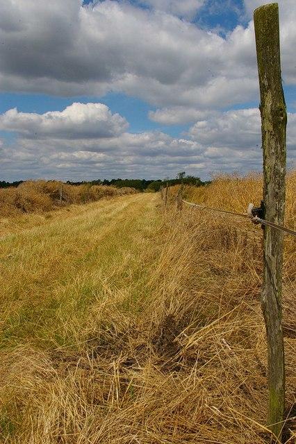 Footpath to Landwick Farm