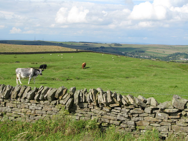 Pastures near Oakeydene Burn