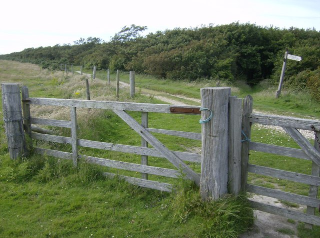 Edge of Brighstone Forest