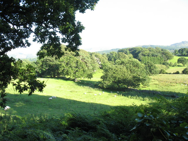 Sheep grazing near Garth Bleuddyn