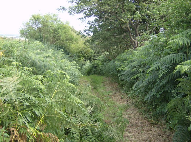 Bracken path towards Limerstone