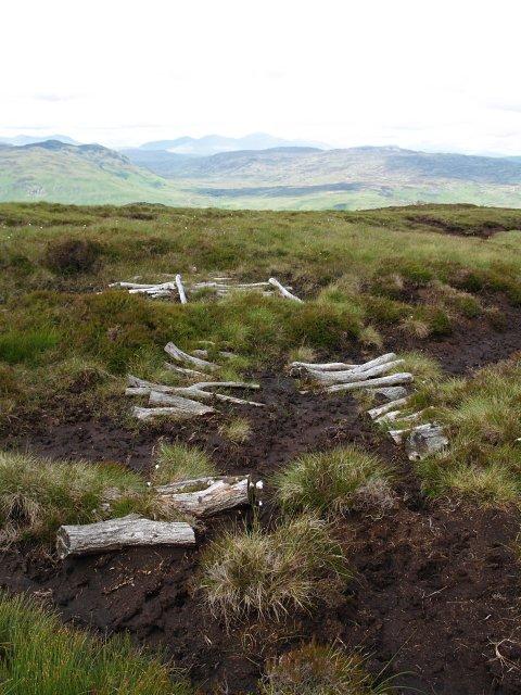 Old bog track