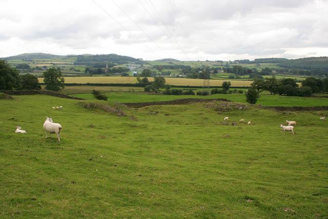 Sheep grazing at Sturdy's Farm