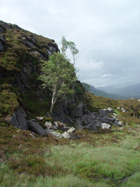Small crag and rowan trees, Creagan na Mointeich