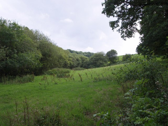 Black Down Copse