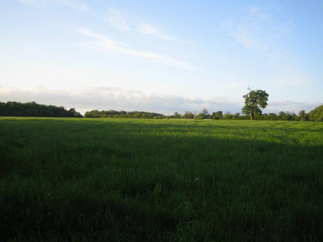 Footpath near Sheephouse Wood