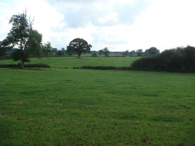 Fields near Common Lane