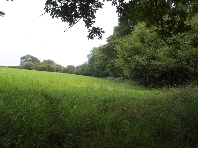Washford Wood
