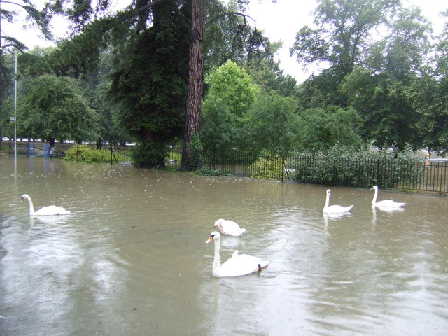 Swans on the Waterside