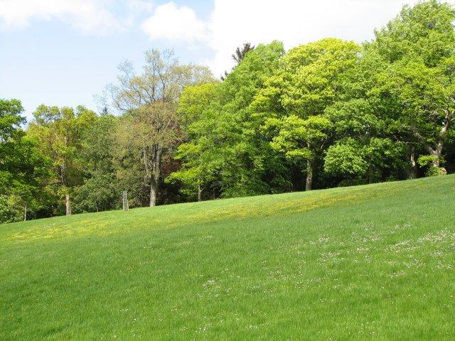 Meadow, Fairnilee